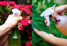 This Amazing Natural Pesticide Recipe Is So Effective You Can Get Rid Of Pests In No Time