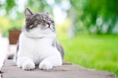 76 Best Cat Images In 2015 Cats Cat Health Pets