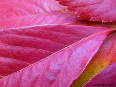 Red leaves by Snezana Petrovic on 500px