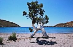 Tree on the beach Kythnos island Cyclades Greek Flowers, Forest Mountain, Tree Forest, Jpg, Flowering Trees, Greek Islands, Forests, More Photos, Greece
