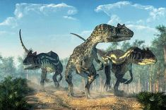 Three allosauruses kick up dust as they hunt along a rocky track created by the passage of large dinosaurs. Deep green plants line the sides of the trail, while a conifer forest dominates the background. Overhead clouds drift through the blue prehistoric skies.