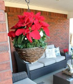 Exceptional 40+ Poinsettia Plant Decor Front Porches_13 Pictures