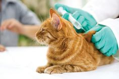 Core Vaccines for Dogs and Cats | Harris Parkway Animal Hospital Blog
