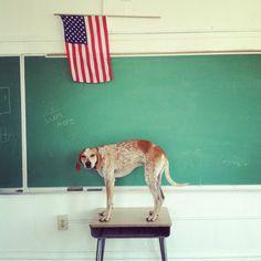 Theron Humphrey. Maddie The Coonhound