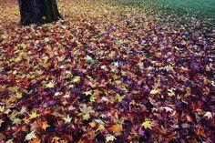 Cornwall Park  Bellingham, Washington