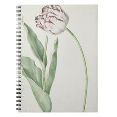 Vintage design with a white and red tulip Spiral Notebook / Photo book #DutchArt #NewParkLane on #Zazzle