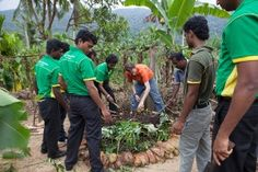 Training for sustainable practices in tea farming in Sri Lanka with the Rainforest Alliance.