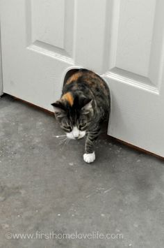 Keep Your Catu0027s Litter Box Hidden But Easily Accessible With This DIY Cat  Potty Door Cut Out!