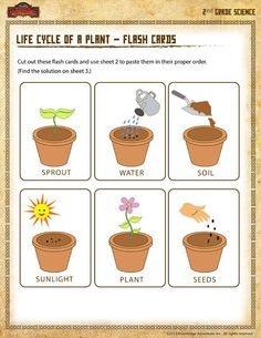 Life Cycle of a Plant – Flash Cards - Printable Science Worksheet for Grade 2nd Grade Worksheets, Science Worksheets, Science Topics, Science Activities, Cycle For Kids, Plant Lessons, Life Cycles, Natural, Women's Cycling