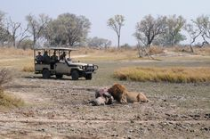 Kanana Pride on a hippo   Okavango Delta   Ker & Downey Botswana