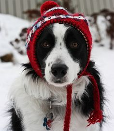 Love border collies. So sweet reminds me of my dog molly (: