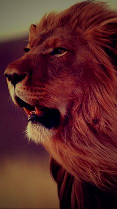 red lion - Google Search
