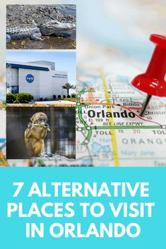 Disney World & Universal Studios is a must when going to Florida but there are many attractions to visit. Here's 7 alternative places to visit in Orlando Cruise Port, Cruise Tips, Travel With Kids, Family Travel, Forever Florida, Animal Experiences, Orlando Vacation, Cruise Destinations