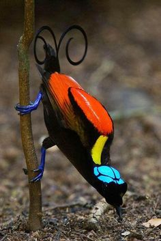 This beautiful bird is known as the Bird of Paradise.. RB