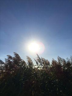 #sun #sunny #day
