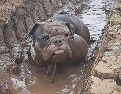 Oh my goodness! Mud Bully