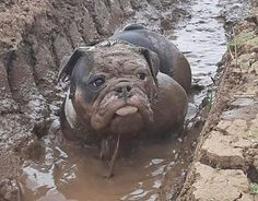 Oh my goodness! Mud Bully