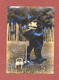 Pam Photo Post: These bizarre Felix photos are like catnip to me and I went to the wall to acquire this one recently, despite its damage. It appears to have been glued into an album (Felix's …