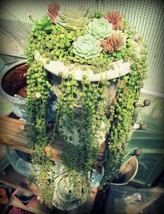 succulent garden | and my passion expanded to using succulents in container gardens ...