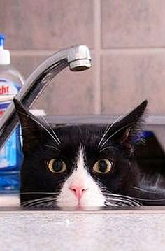HELP - PLEASE NO BATH TODAY !!!!     #photo by hoschie on DeviantArt #cat cats funny cute kitty kitten animal pet nature
