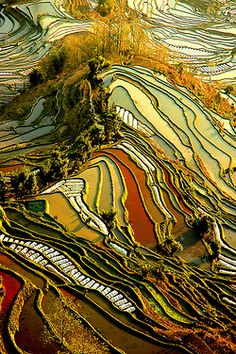 visitheworld: Yuanyang Rice Terraces in Yunnan, China (by ichauvel).