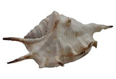 Spiny Seashell on OneKingsLane.com