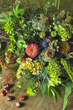 秋ですね。   お花もいいけど、  やっぱり花より団子の季節です。  美味しいものいっぱいですから  どうぞ皆様秋の味覚を満喫してくださいね。    フラワーノリタケの店内は  秋の色とりどり、団子を上回る美しさです^^  どうぞゆっくりご覧ください。          ...