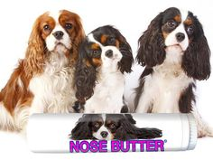 Cavalier King Charles Spaniel Nose Butter for Dry, Crusty Noses .15 oz