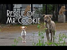He Goes To Feed 2 Stray Dogs, But Then Watch The Dog On The Left. UNBELIEVABLE! - LittleThings.com - Amazing Videos, Stories and News from around the world. It's the little things in life that matter the most! - LittleThings.com