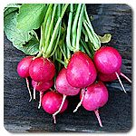 Organic Pink Beauty Radish - Bright pink radish with a uniform round to oval shape and medium tops. Crisp white flesh has a distinctive and delicious flavor.