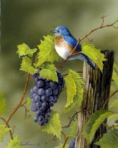 Bluebird and Grapes by Robert Hautman