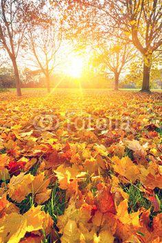 Zonnige herfst bladeren