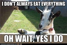I don't always eat everything...oh, wait, yes I do.