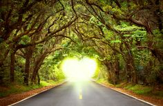 Nothing makes you appreciate beauty like a Tallahassee Canopy Road. #IHeartTally