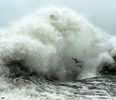 teahupoo wipeouts - Saferbrowser Yahoo Image Search Results