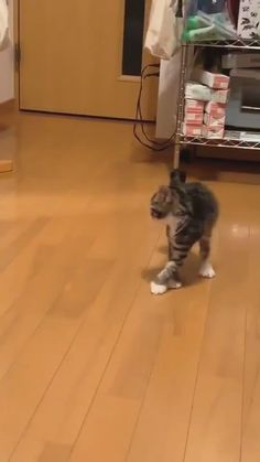 Funny Cute Cats, Funny Kittens, Cute Cats And Kittens, Cute Funny Animals, Cute Baby Animals, Cool Cats, Kittens Cutest, Animal Antics, Animal Memes