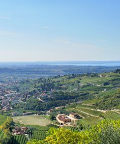 It may be best known to Americans as the birthplace of Amarone, but Valpolicella is home to four styles of wine and millennia of viticultural history. From Ancient Greek cellars to contemporary collectible bottles, the red wines of this Italian region might just become your new favorites.