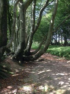 Quantock hills Somerset, Countryside, Trail, Website, Places, Beautiful, Lugares