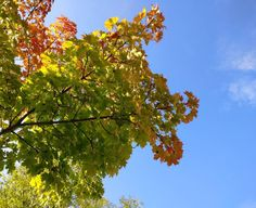 over and over  . #natureknowsbest#deinbayern #instanature #germany #igersmunich #tree #autumn #jesień #fall #otoño #awww