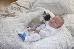 A frenchie imitating a baby. | 41 Pictures You Need To See Before The Universe Ends