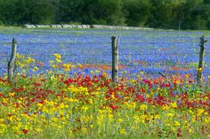 ranch house with field of flowers - Yahoo Image Search Results