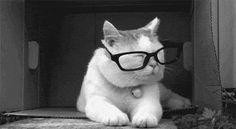 el gato.gif del lunes 15 de abril de 2013 #CatGIF