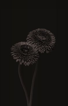 black | schwarz | noir | nero | negro | μαύρος | черный | काला | ブラック | 黑 | nature | flower | flowers | tree | trees | -----> Like to relax not only visually? Try ASMR ... and visit ... https://www.youtube.com/channel/UCBNHxodKKw1TnoGJogFApTA/videos