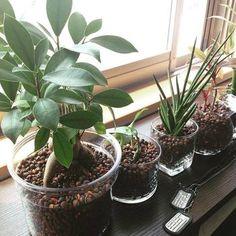 ・臭いが無く、室内でも清潔に育てることができる ・インテリア性が高い ・専門知識が無くても育てやすい ・虫がわく心配が無い ・土での栽培に比べ、水やりの回数が少ない グリーンの寄せ植えも簡単にできますよ♪