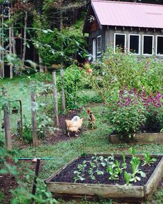 Vegetable Garden Design Ideas – Greenest Way Garden Care, Farm Gardens, Outdoor Gardens, The Farm, Organic Gardening Tips, Vegetable Gardening, Allotment Gardening, Organic Vegetables, Edible Garden