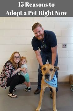 25 Best Happy Tails from JHS images in 2019   Adoption