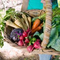 Where to buy organic?