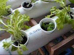Indoor Garden Using Inexpensive Materials