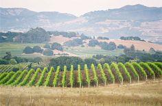 #vineyard   -napa valley   photography by jose villa