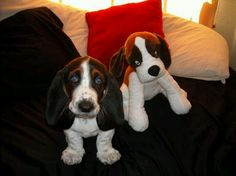Aww! A pup with her pup :)